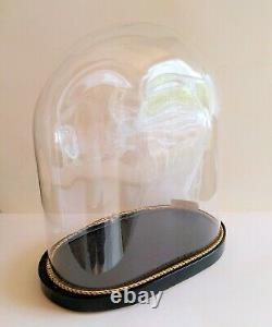 Antique Large French Oval Glass Dome with Wooden Base for Taxidermy or Clock