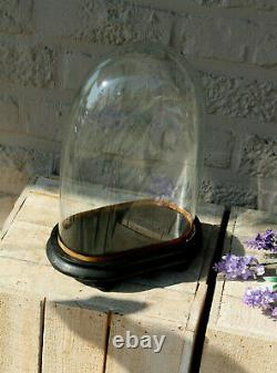 Antique french small glass oval dome globe victorian taxidermy